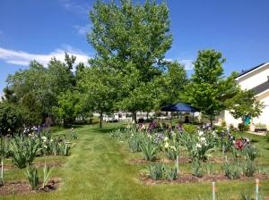 Holly Garden